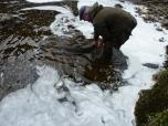 Releasing the 35lb salmon
