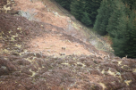 Some young stags from the helicopter